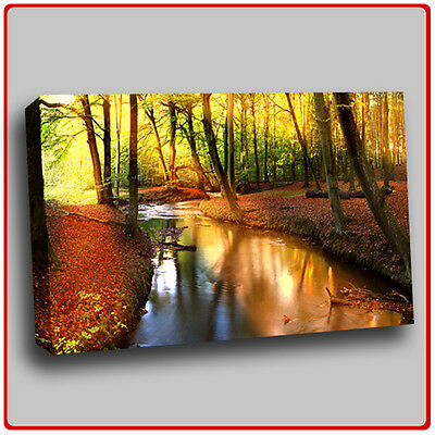 Modern Canvas Art Print Scenic Sunbeam forest stream