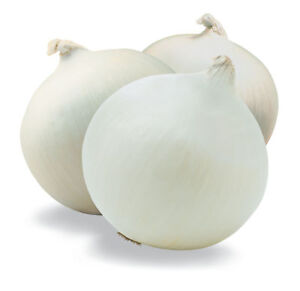 CEBOLLA-BLANCA-de-Espana-500-Semillas-Seeds