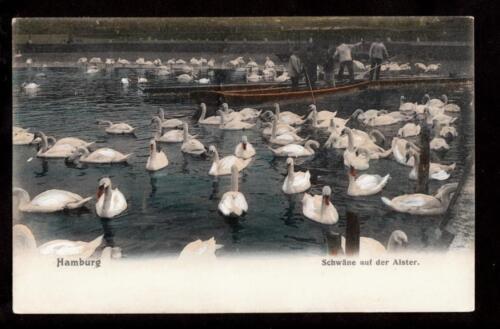 1906 hand painted swans birds hamburg germany postcard