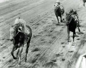 NATIVE-DANCER-1953-HORSE-RACE-RACING-8X10-PHOTO-PICTURE-RARE-SWEET
