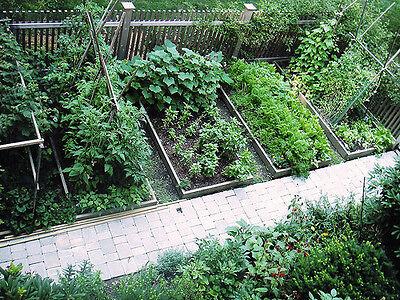25 HEIRLOOM VEGETABLE GARDEN  SEEDS NON-GMO/HYBRID ORGANIC SURVIVAL SEED BANK