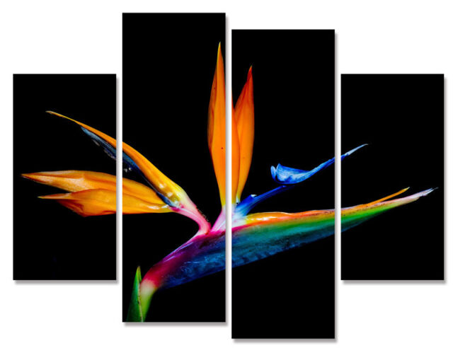 Bird In Paradise Modern Decorative Wall Art On Quality Canvas Prints Set Of 4