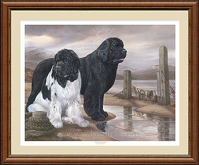 NEWFOUNDLANDS Newfies fine art limited edition dog print 'At Home by the Sea'