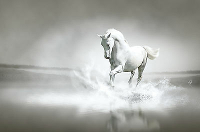 White Horse Canvas Pictures Galloping Through Water Wall Art Prints More Sizes