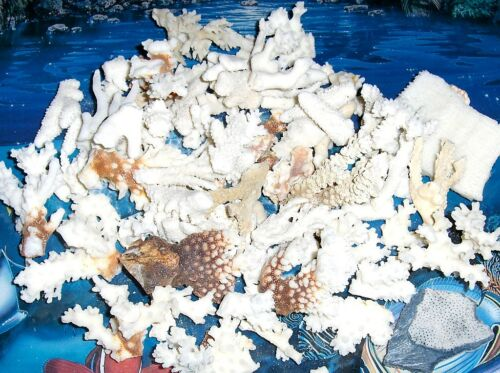 """1/2 POUND PLUS BROKEN CORAL PIECES  MIX 1"""" to 4""""  DECOR CRAFT REEF SEA SHELL"""