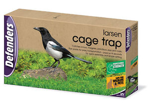 how to build a magpie trap