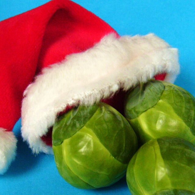 BRUSSELS SPROUT - DARKMAR 21 - 200 seeds [older variety for Christmas & beyond]