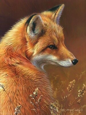 WILDLIFE ART PRINT - Curious - Red Fox by Joni Johnson-Godsy 14x11 Poster