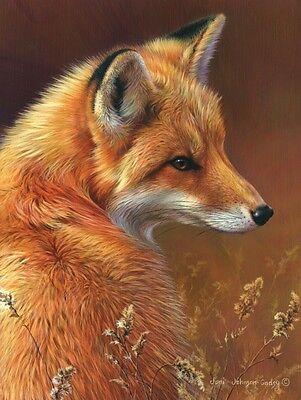 WILDLIFE ART PRINT - Curious - Red Fox by Joni Johnson-Godsy 14x11 Poster
