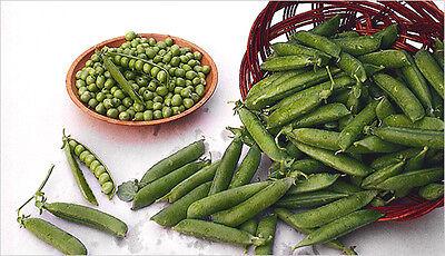 Heirloom Non-GMO LINCOLN SHELL PEA Bulk 200 SEEDS (2 oz) Heat Tolerant HG YIELD