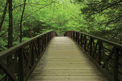 Bridge in Great Smoky Mountains National Park-Wall Mural-12'wide by 8'high