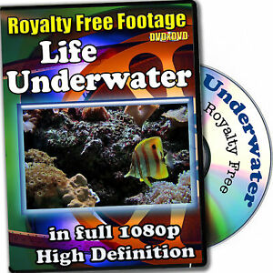 Underwater Life-HD RoyaltyFree Stock Footage,Commercial