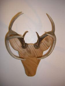 Rackheads Deer Buck Antler mounting plaque kit. Works w ...
