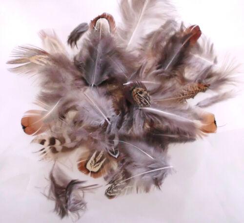 Echte Hahnenfedern Fasanenfedern,Perlhuhnfedern für die Deko!Osterdeko!Natur!