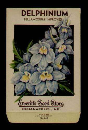 1930's DELPHINIUM FLOWER LITHO SEED PACKET - EVERITT'S SEED, INDIANAPOLIS,IND