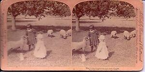1895-Stereoview-Card-034-The-Little-Shepherd-and-Their-Flocks-034-Underwood-Children