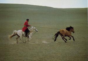 Catching Wild Horses•Binnen,Mongolia 1977•Photo by Vincent Mentzel 4x6 POSTCARD