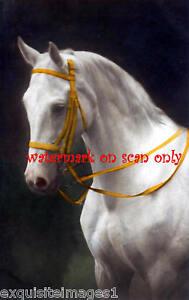 Old Photo~White Arabian Horse ProfileNEW Lge Note Cards