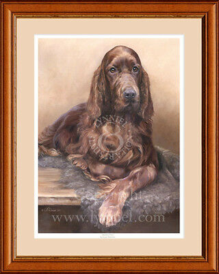 IRISH 'RED' SETTER fine art limited edition dog print