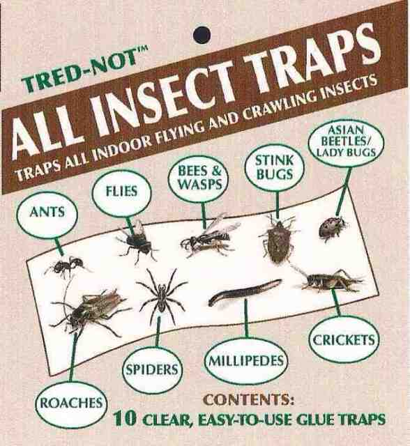 200 pk INSECT TRAPS. Fly, Lady Bug, Spide,r Roach Scorpion Cricket STICKY GLUE
