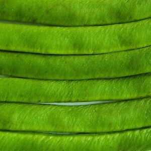 RUNNER-BEAN-LADY-DI-36-Seeds-stringless-pods-hold-on-the-plant-longer