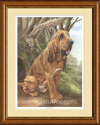 BLOODHOUND limited edition fine art dog print by Lynn Paterson