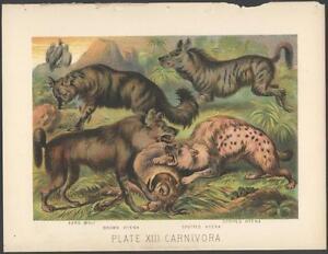 RARE Original 1880's FIGHTING HYENAS Chromolithograph ANTIQUE Print NOT A COPY!