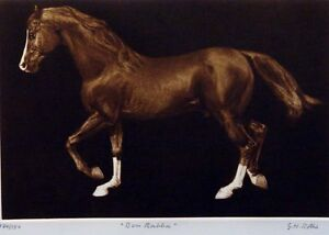 G-H-Rothe-034-Ben-Rabba-034-original-mezzotint-horse-Art-Hand-Signed-Limited-Edition