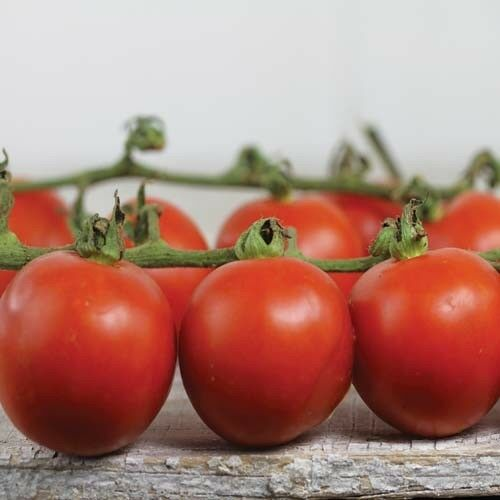 VEGETABLE TOMATO CHADWICK CHERRY 100 FINEST SEEDS