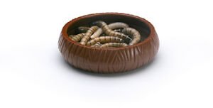 LEE-039-S-WORM-DISH-MEAL-LIZARDS-DRAGONS-REPTILE-FOR-FOOD-FREE-SHIPPING-TO-THE-USA