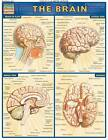 Brain: Reference Guide by BarCharts (Other book format, 2001)