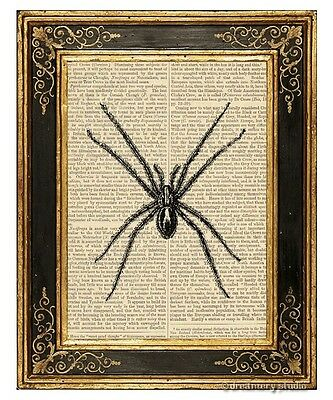 Spider Art Print on Antique Book Page Vintage Illustration Garden Insects