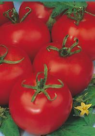 TOMATE TRES CANTOS 150 Semillas Seeds
