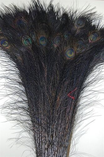 """50 Pcs BLEACHED PEACOCK TAILS Feathers 35-40"""" DEEP BLACK; Costume/Art/Crafts"""