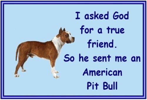 New Dog fridge magnets New Gift Free UK p//p American Pit Bull
