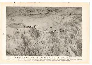 1947-Wild-Elk-Running-In-Snow-Magazine-Page-Photo