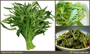 Ong-Choy-Kangkong-Water-Spinach-Ipomoea-aquatica-250-Vegetable-Seeds