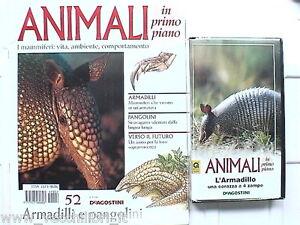 ANIMALI IN PRIMO PIANO ARMADILLI PANGOLINI N. 52 fauna