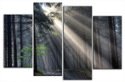 EXTRA LARGE CANVAS PICTURE SUN RAYS FOREST MULTI 5 FEET
