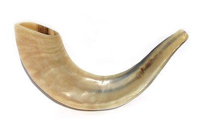 "Kosher Polished Ram's Horn Shofar Size 11""-12"""