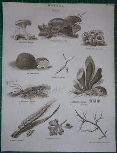 C1802 Aufdruck Fungi Merulius Nidularia Knolle Trichia Sphaeria Uredo Aecidium