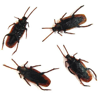 12 BULK REALISTIC COCKROACH creepy novelty bugs toys roach toy fake roaches NEW