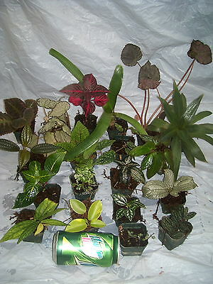 20 terrarium vivarium live plants   great for dish gardens SURPLUS SALE $15 OFF