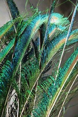 "100 Pcs PEACOCK SWORDS Natural Feathers 25""-30"" Craft/Pad/Decor/Costume/Hats/Art"
