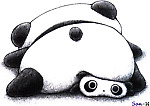 PANDA SQUASHED PRICES