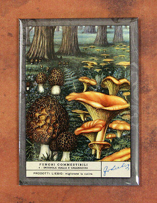 GOLDEN CHANTERELLE MUSHROOMS Magnet (#3), Art from 1950s Trade/Advertising Card