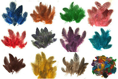 "1/4 lb Spotted Guinea Hen Feathers 1-4"" body plumage 12 colors 1600+ count"