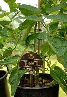 Cast Brass Aubergine Vegetable Sign