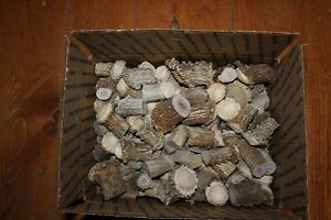 Medium-Box-full-of-1-and-2-Deer-Antler-Shed-Burrs-for-Cabinet-Knobs