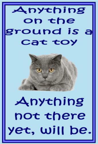 Acrylic cat fridge magnets . Chartreaux Funny cat sayings